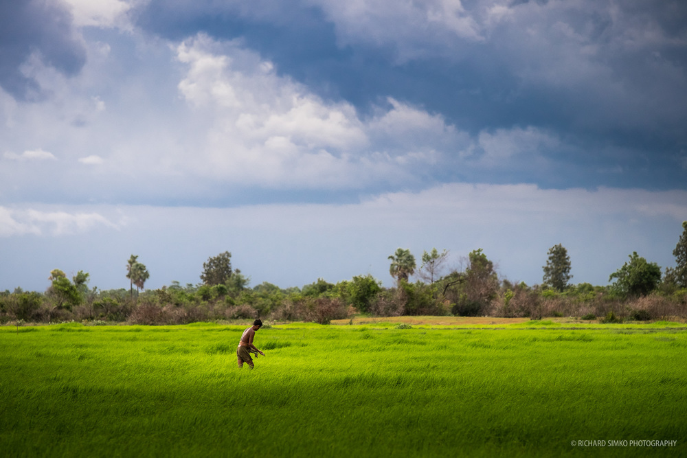 Man working in countryside rice field somewhere near Siem Reap.  Fujifilm X-T1, Fujinon 50-140mm   2.8