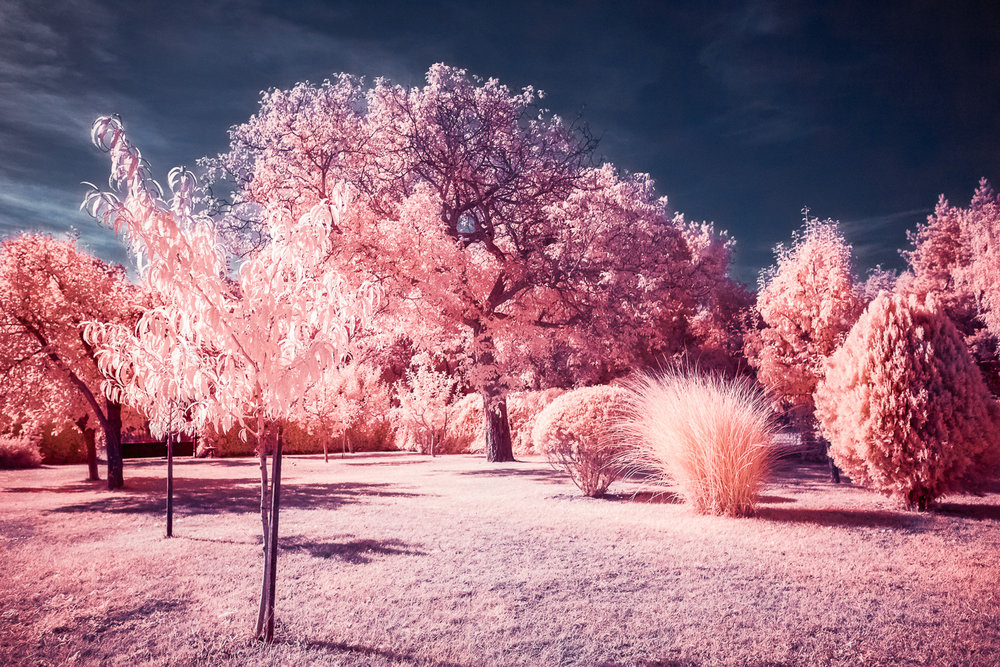 Back of out garden in infrared false color rendition.