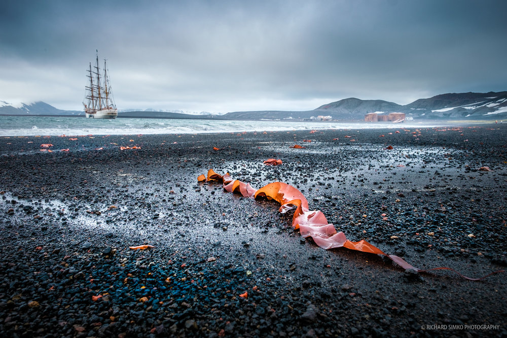 There is plenty of red colored kelp on The Whalers beach that contrasts well with dark volcanic peddles. It makes and excellent foreground with Europa at anchor in the safe waters of Deception Island bay.