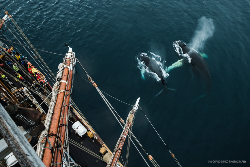 """Apart from good light, being at the right place at the right time is essential in photography. So it happened I was up in the rigging when this whale couple surfaced on the side of the ship and blessed us with about 15 minutes of the most spectacular show one can see in Antarctica. I snapped a few shots and then just stared at event unfolding below me in awe. This was the most beautiful """"welcome ceremony"""" throughout entire trip to Antarctica."""