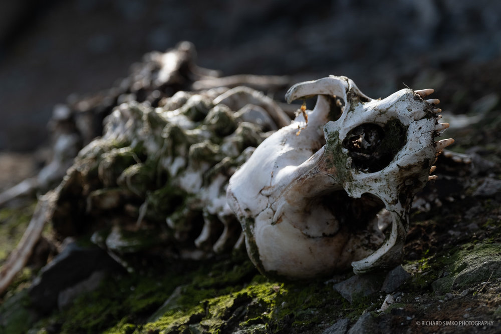 This is wilderness with everything that comes with it. Only the strongest prevail. The weak die. There are remains, bones and skulls everywhere.