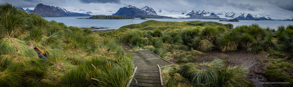 Prion Island is one of the most heavily protected locations in South Georgia. And it is the only place we can visit and observe nesting albatrosses.