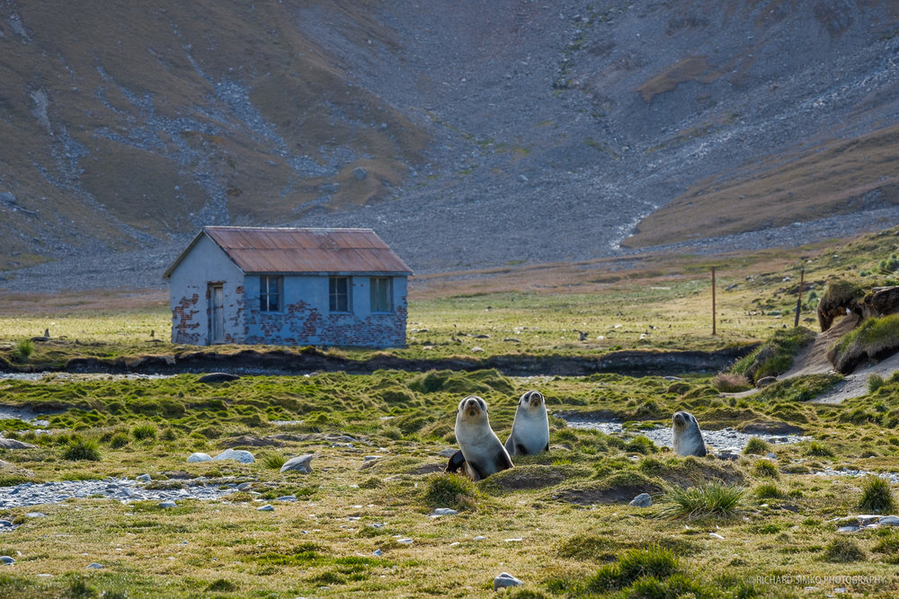 Small hut in Ocean Harbour and of course antarctic furs seals that we can find almost everywhere.