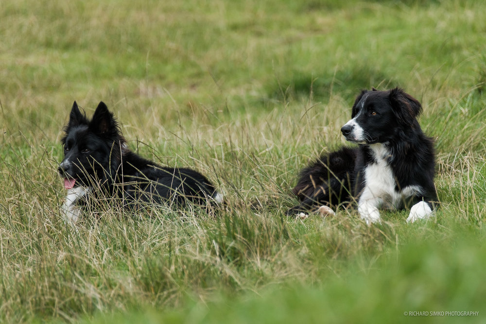 There is lot of dogs that seem to come from the same mother.