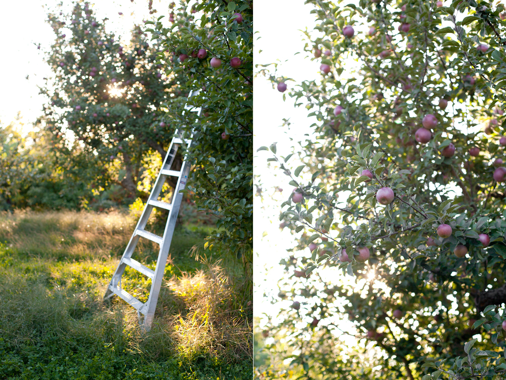 Apple-Picking-01.jpg