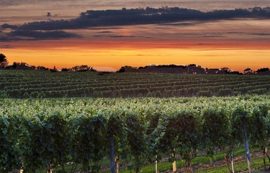 wolffer-vineyard-hamptons.jpg