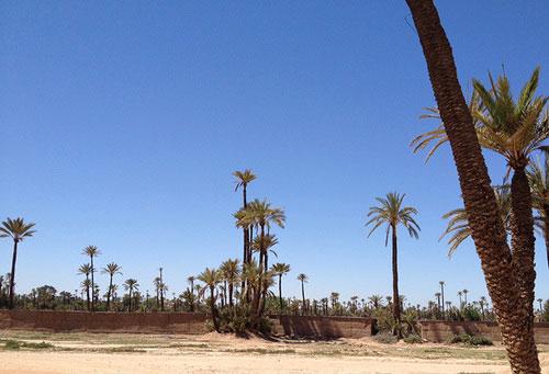 la-palmeraie-marrakech.jpg
