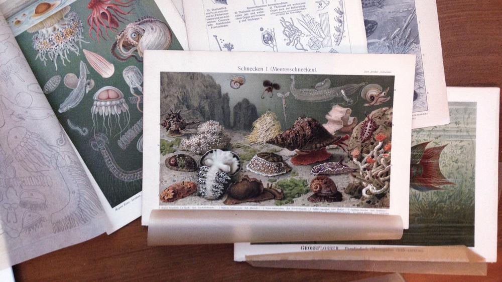 marine life illustrations