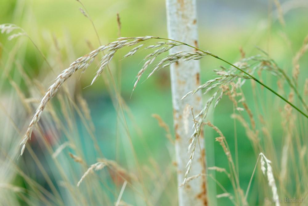 Grass gate
