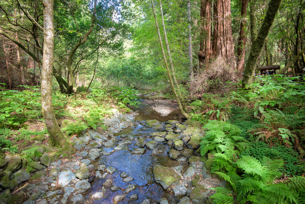 Muir Woods, CA.