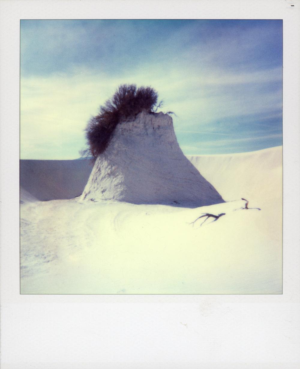 polaroid 103.jpg