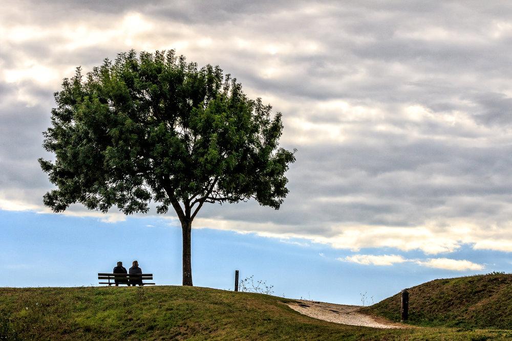 L'arbre d'Oléron