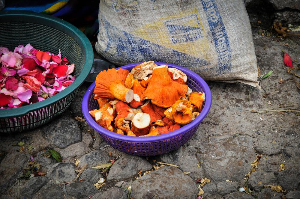gUATE-mushrooms.jpg