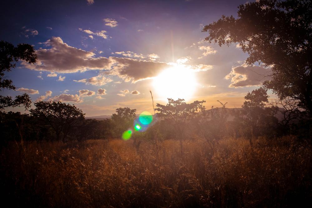 safari002.jpg