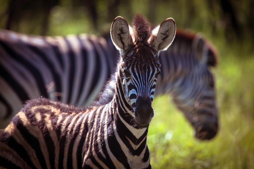 safari012.jpg