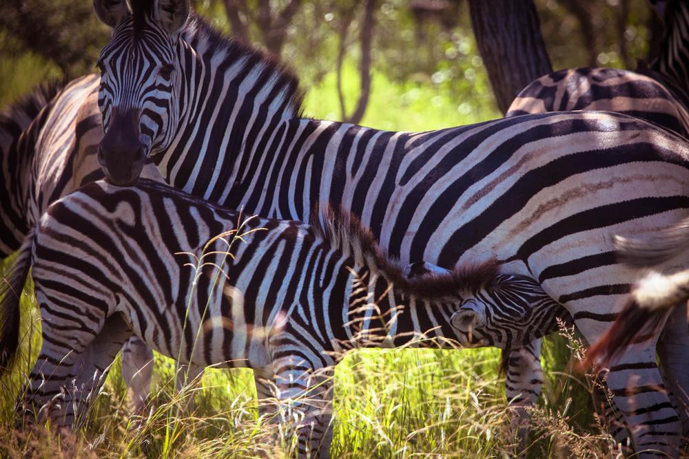 safari016.jpg