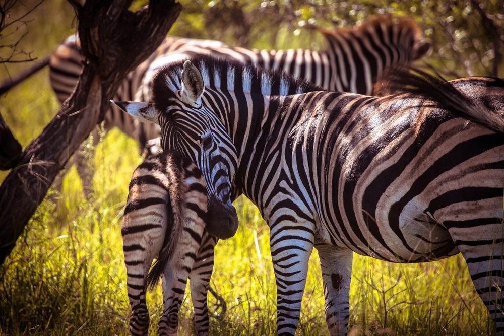 safari017.jpg