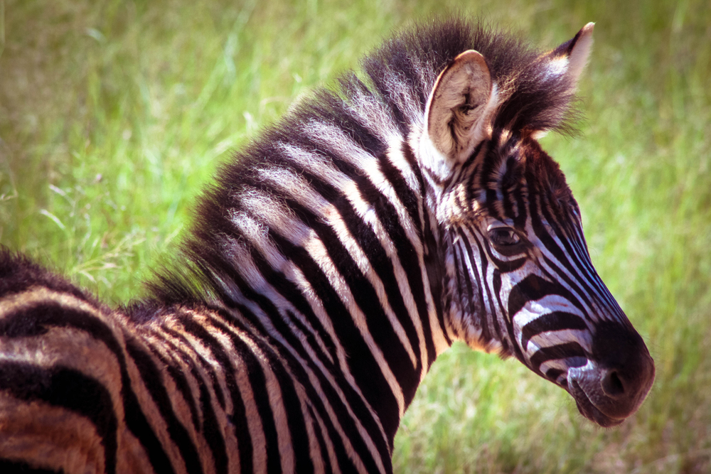 safari030.jpg