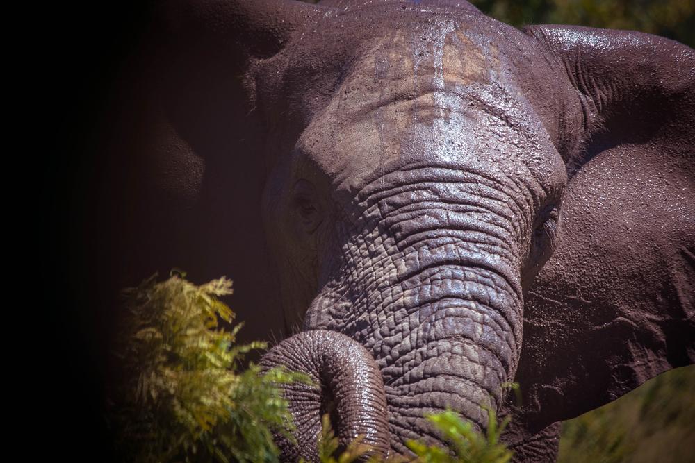 safari035.jpg