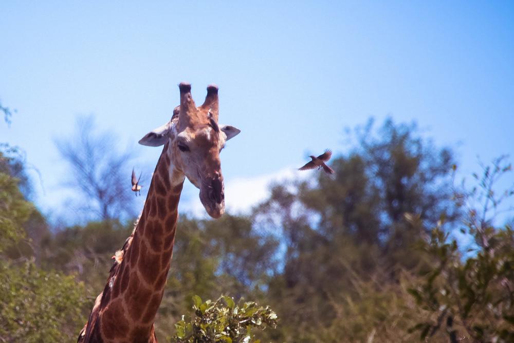 safari049.jpg