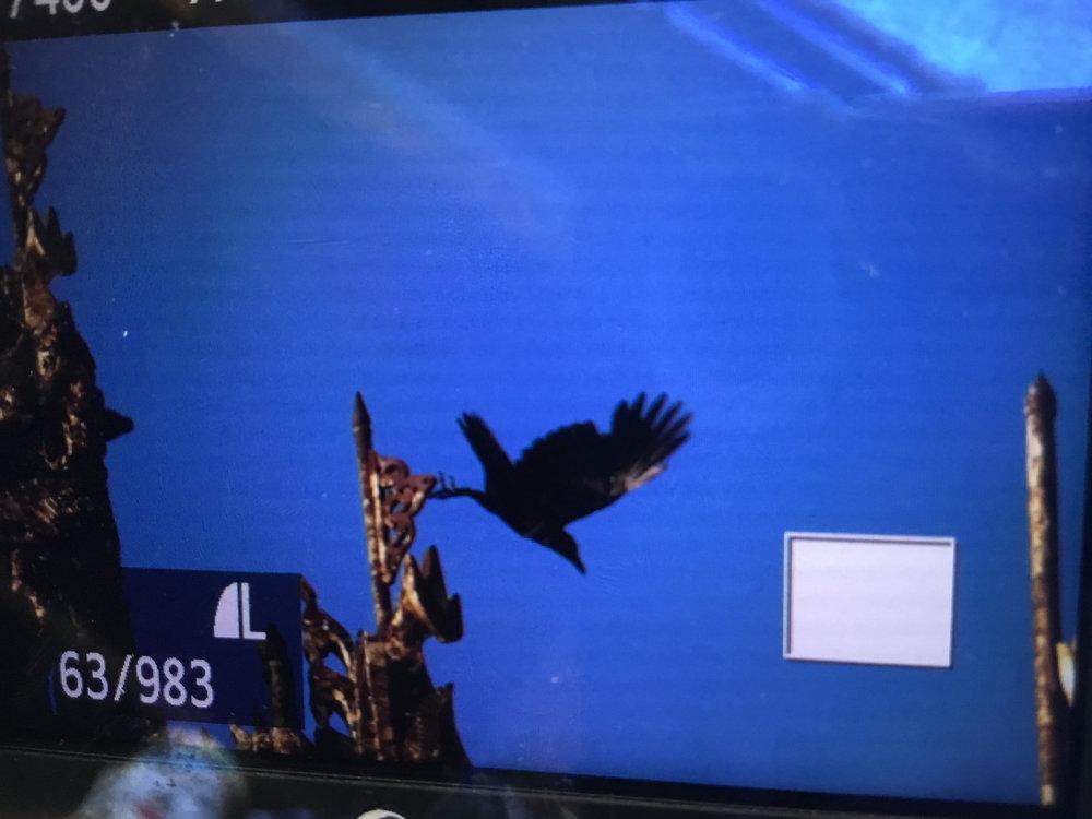 birdy001.jpg