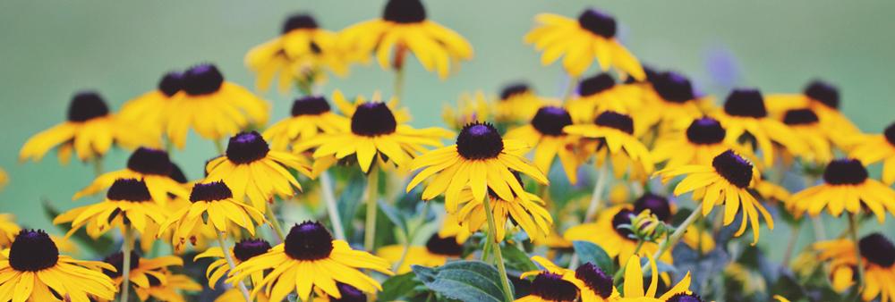 flowerbanner.jpg