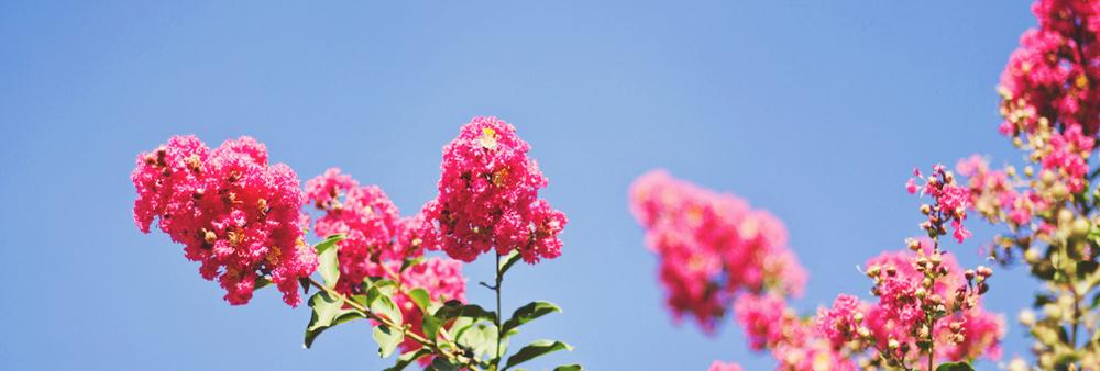 redflowerbanner.jpg