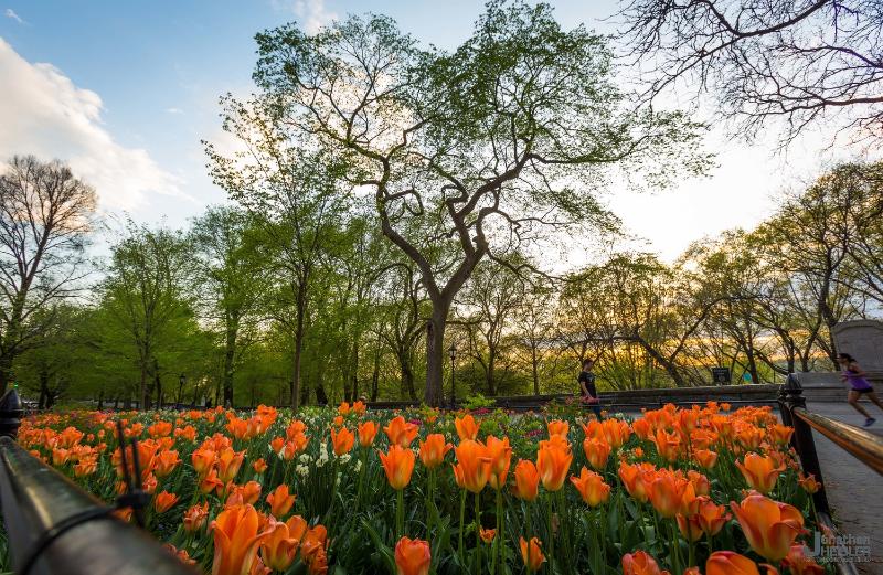 Riverside Drive NYC Springtime