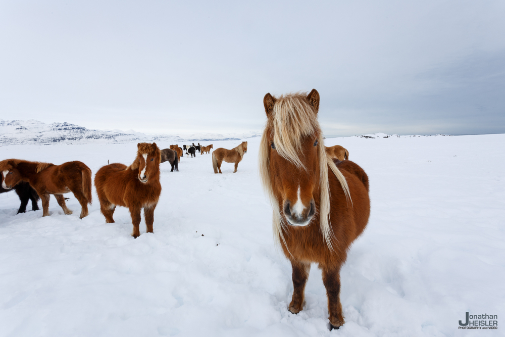 Iceland Winter Photos_  Jonathan Heisler __  02292016 _ 035.jpg