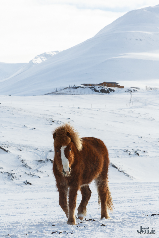 Iceland Winter Photos_  Jonathan Heisler __  02292016 _ 050.jpg