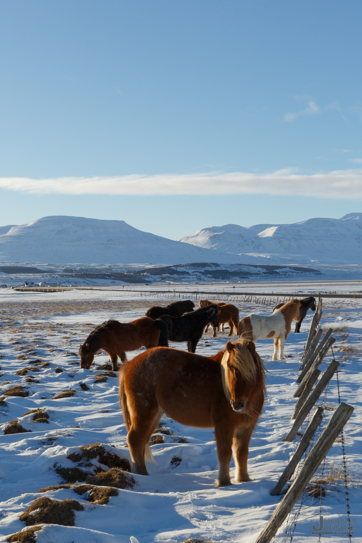 Iceland Winter Photos_  Jonathan Heisler __  02292016 _ 055.jpg