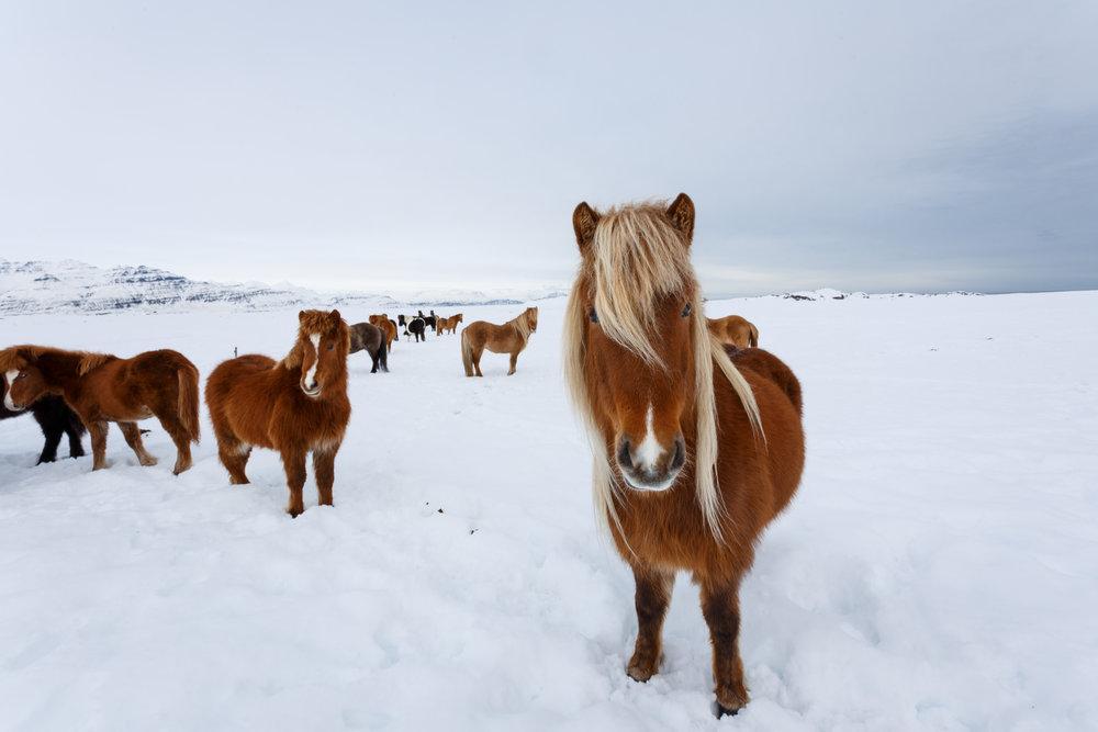 2 _ Iceland_  Jonathan Heisler  _ _ 12112016 _ 743.jpg