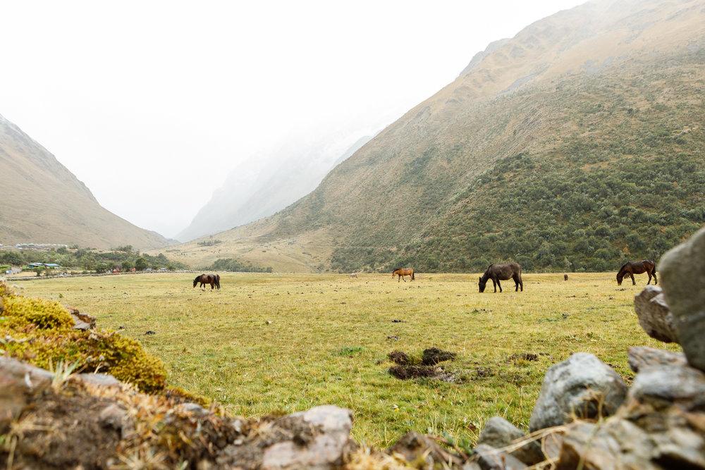 Peru _  Jonathan Heisler  _   5.15.2018 _ 0282.jpg