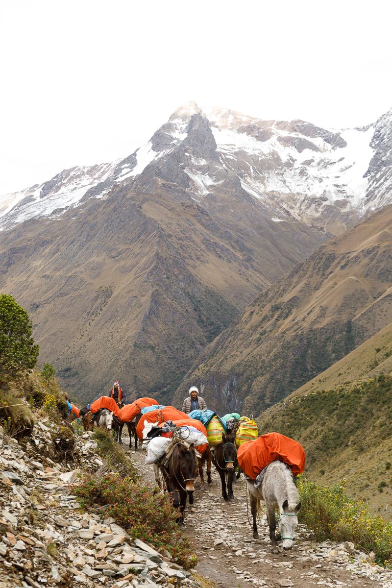 Peru _  Jonathan Heisler  _   5.15.2018 _ 0452.jpg