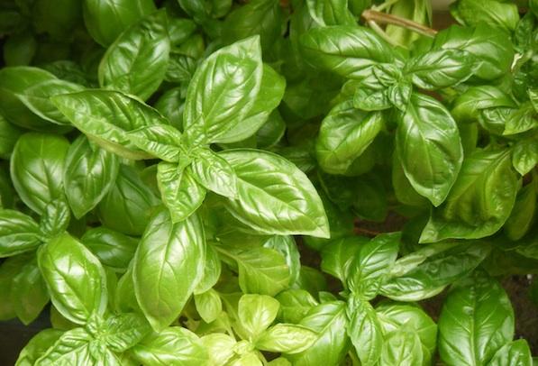 herb-garden-for-beauty