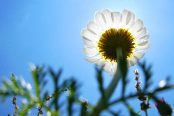 sunny-flower-natural-radiance