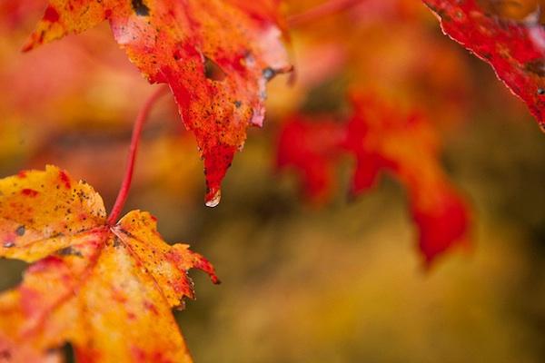 fall-beauty-tune-up