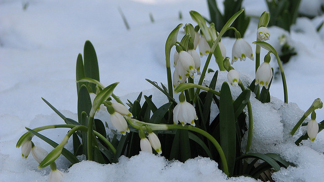early-spring-beauty.jpg
