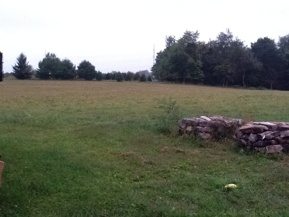 cut pasture.jpg