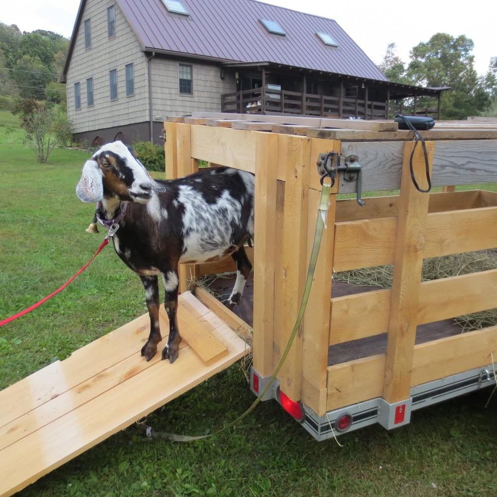 small animal transport.jpg