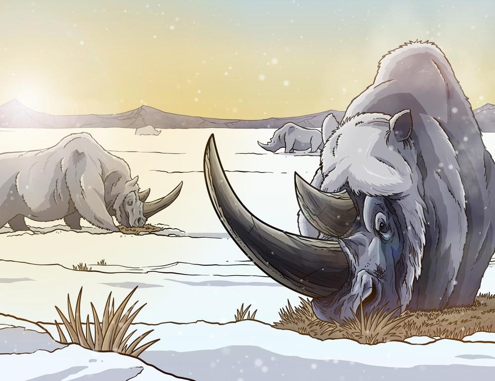 Woolly Rhinos!.jpg