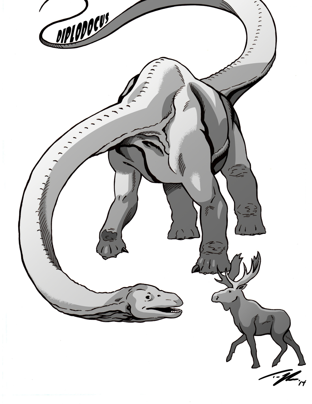 Big herbivores, past and present. Diplodocus meets Moose.