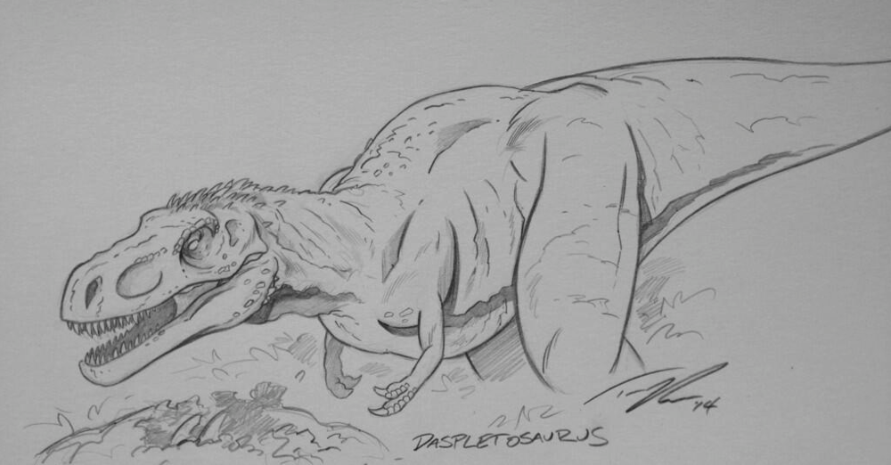 A cousin of T.rex, Daspletosaurus.