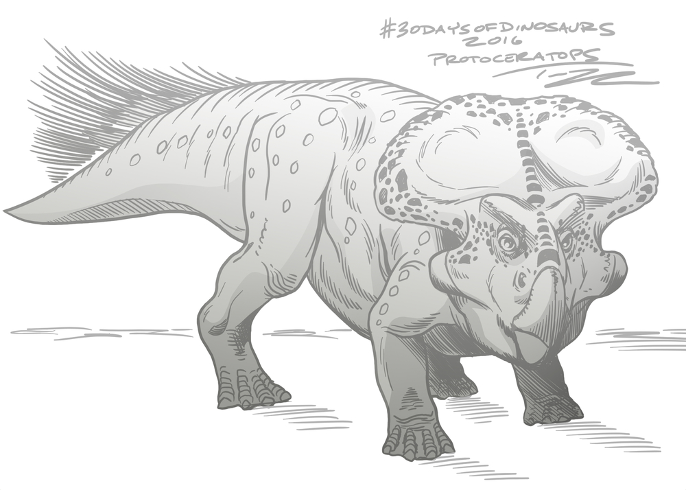 ProtoceratopsTedRechlin