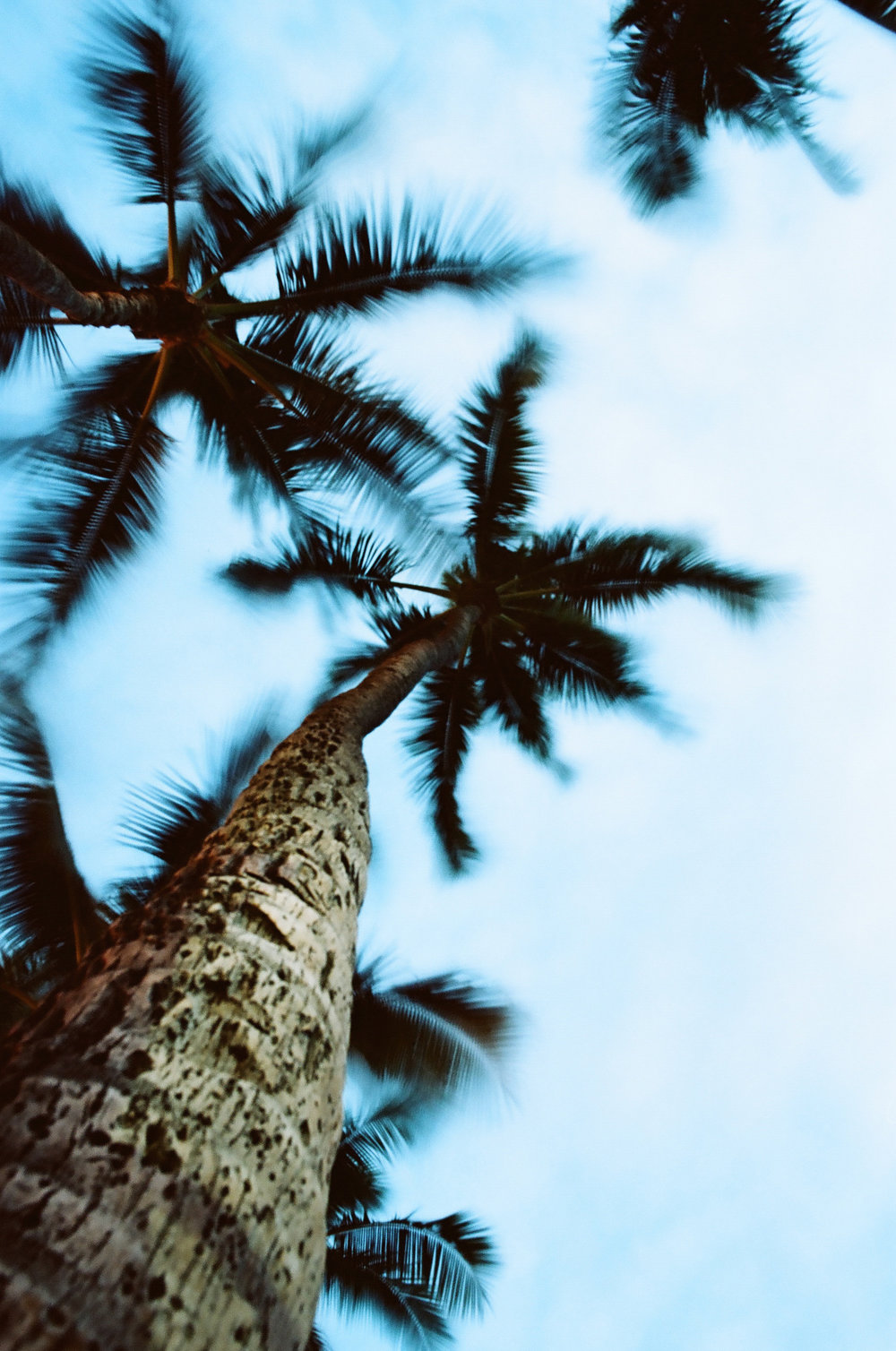 TreesMotion02.jpg