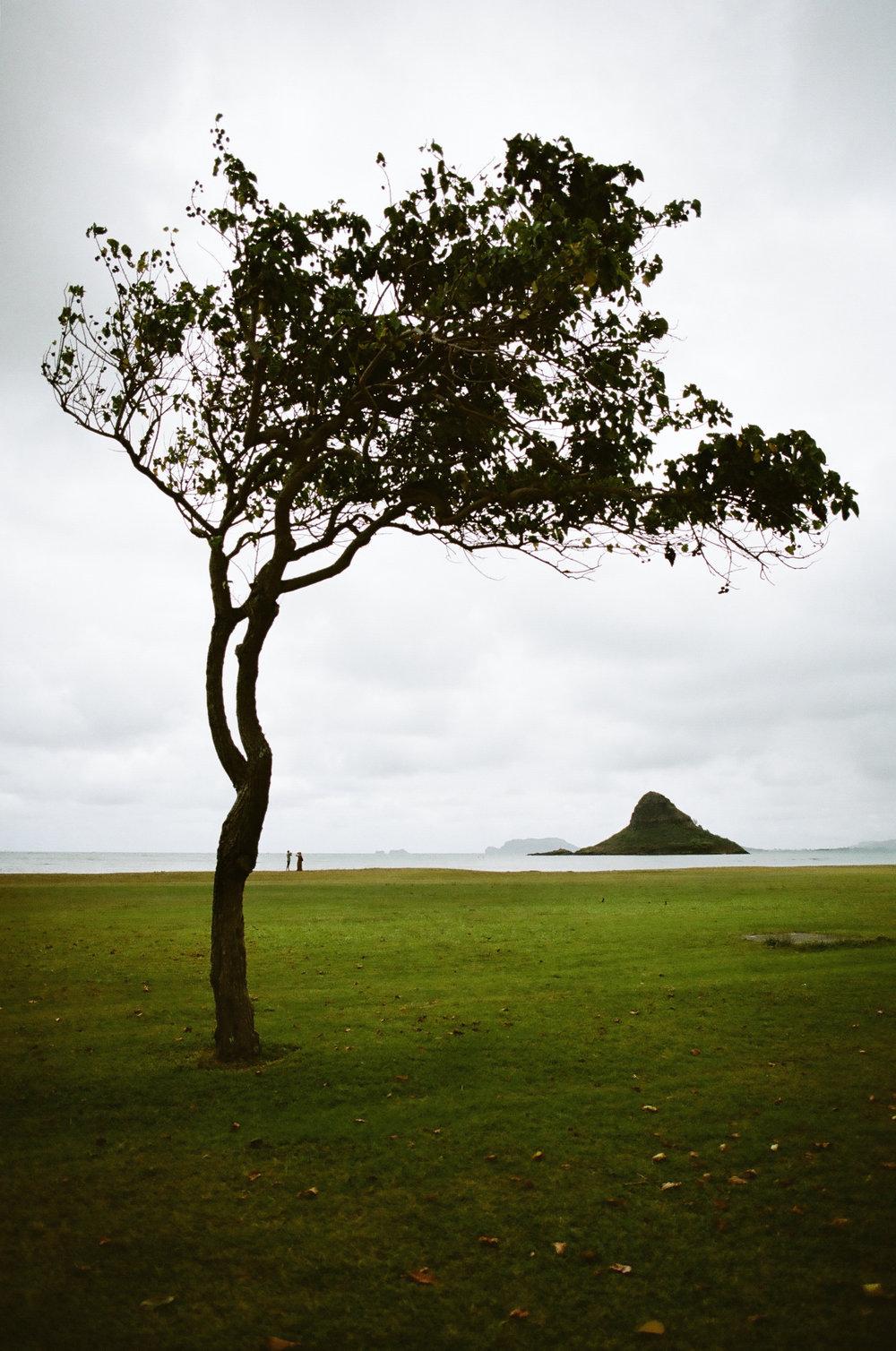 Hawaiian_Tree_Film_01.jpg