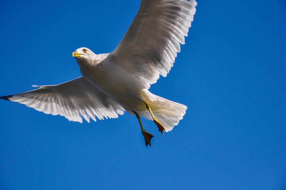 Seagull_1.jpg