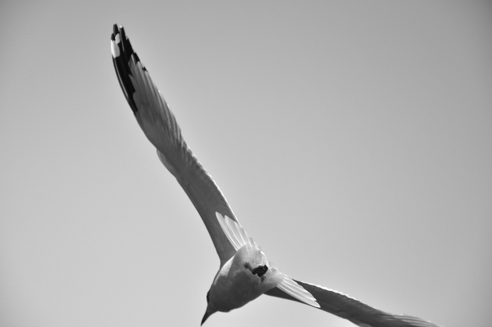 Seagull_4.jpg