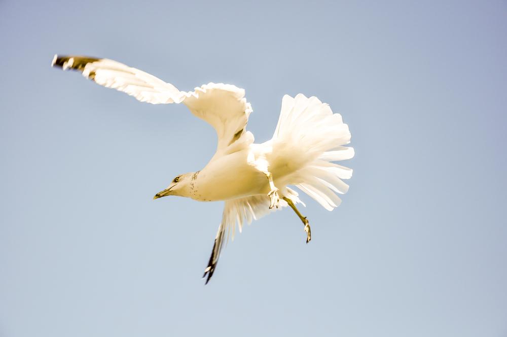 Seagull_5.jpg