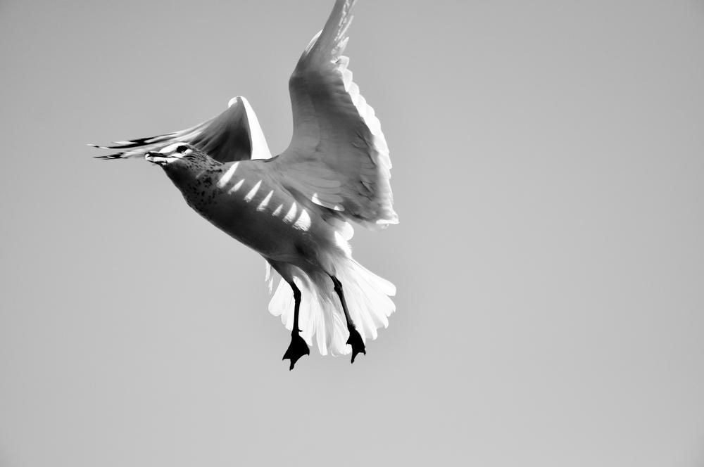 Seagull_8.jpg